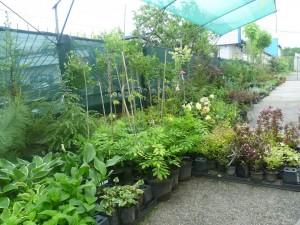 двор градински 1