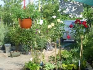 двор градински