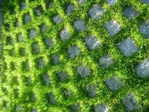 зелени павета