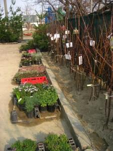 овощни дървета